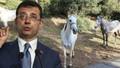 Adalar'ın kayıp atları Kuzey Irak'ta iddiası!