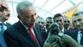 Hayvan hakları yasasında sona gelindi! Hapis cezaları yolda…