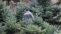 Sayıştay raporuna yansıdı! Orman Genel Müdürlüğü envanter çıkarmamış