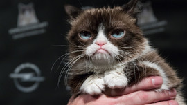 İnternetin göz bebeğiydi! Grumpy Cat öldü!