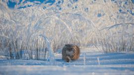Yılın en iyi 25 fotoğraf vahşi yaşam fotoğrafları