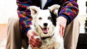 Dünyanın en zeki köpeği hayata veda etti