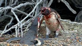 Eşini başka erkekle basan penguen terör estirdi!