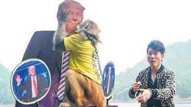 ABD seçiminde anketler yanıldı, kahin maymun yanılmadı!
