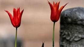Türk edebiyatında bir çınar devrildi! Vedat Türkali hayatını kaybetti!