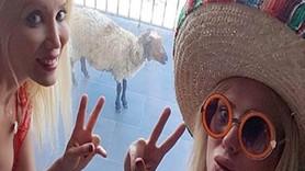 Cicişler, kurbanlık koyunu tatil için Çeşme'ye götürdü