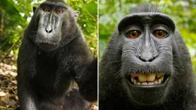 'Maymun selfiesi' davasında telif hakkını kim kazandı?