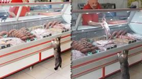 Sosyal medya fenomeni kedi 'Sakatatçı Yeşim' sahibini zengin edecek