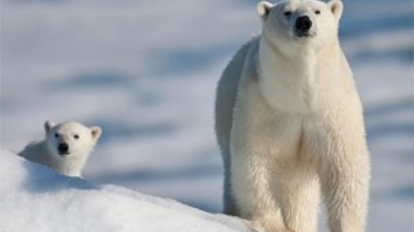 Balbay tahliye oldu, o kanal kutup ayısı belgeseli yayınladı!