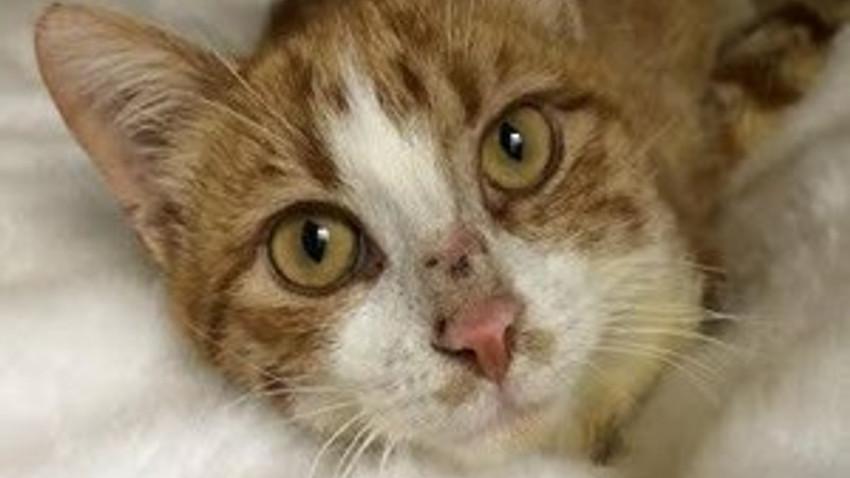 Kedi Umut'tan savcılığa dilekçe! Sevgili insan, bir daha...