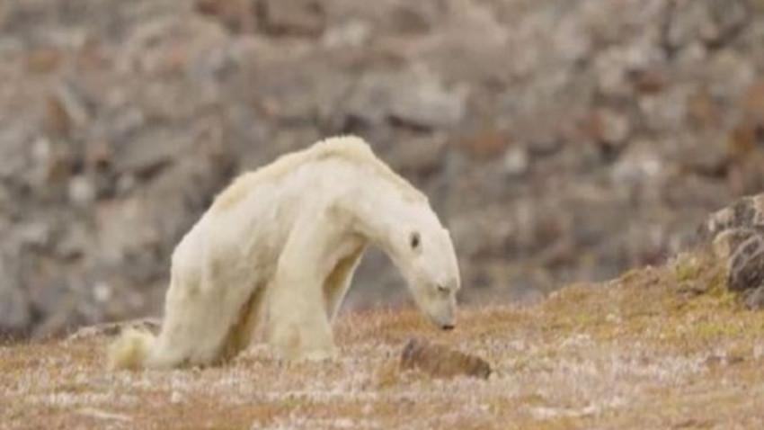 National Geographic'ten 1 yıl sonra gelen kutup ayısı itirafı!
