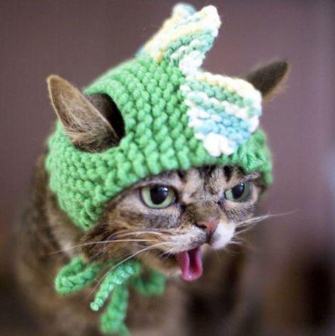 5 milyon takipçisi olan fenomen kedi Lil Bub hayatını kaybetti - Sayfa 2